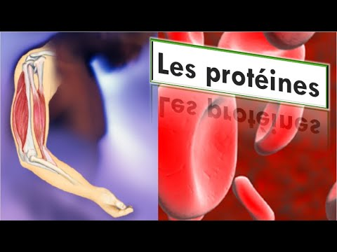 Rôles des protéines dans l'organisme humain | Composition chimique des protéines