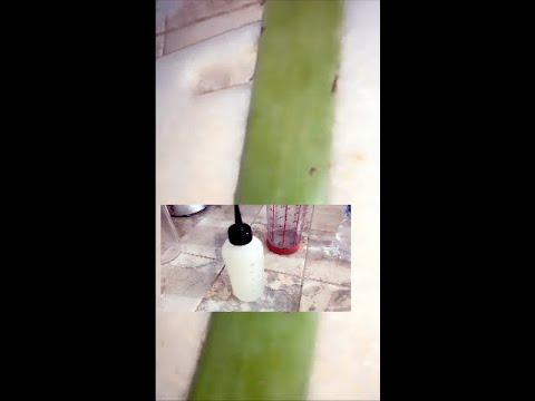 Gel à base d'Aloe vera pour cheveux crépus