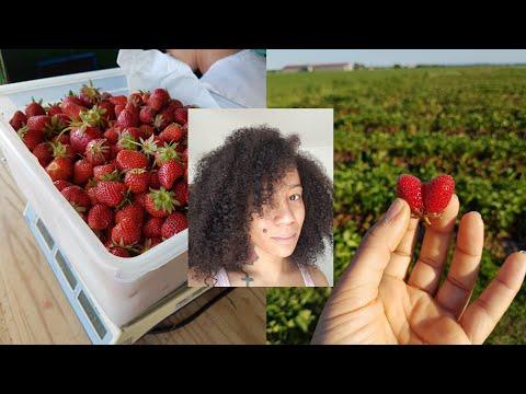 Masque Revitalisant à la fraise, huile d'olive et Miel| Cheveux Crépus.