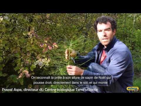 Jardiner au naturel avec la décoction de prêle