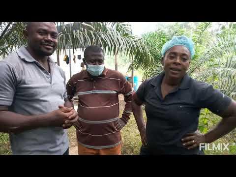Des noix de palmiste à l'huile de palme: cette brave dame vous explique
