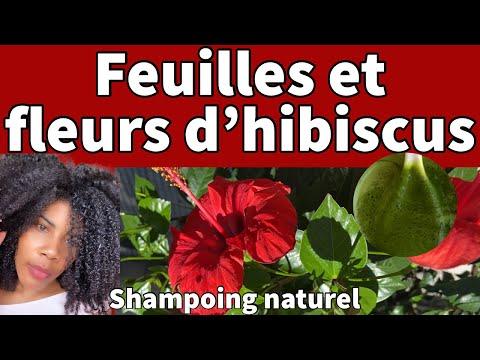 Hibiscus pour la pousse plus rapide des cheveux /shampoing naturel avec les feuilles et les fleurs