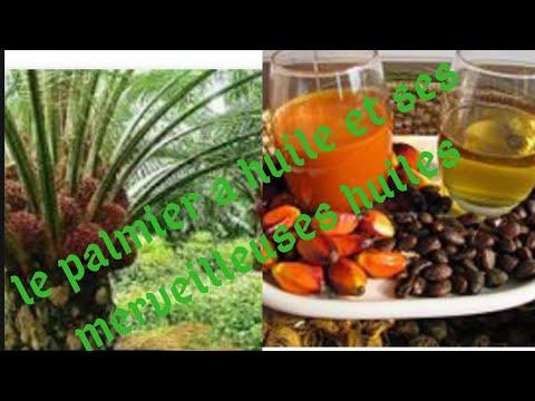 Comment fabriquer l'huile de palmiste: une merveille pour les cheveux 🤗